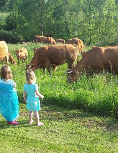 Koeien-kijken-in-wei-bij-Maziéras